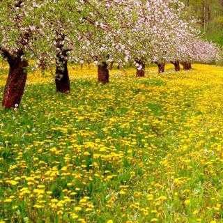 春天头像 自然风景