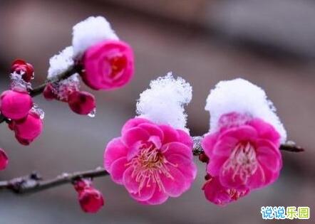 下雪了的说说 最喜欢下雪的说说