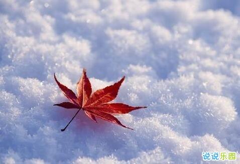冬至快乐的说说 冬至温暖说说祝福语